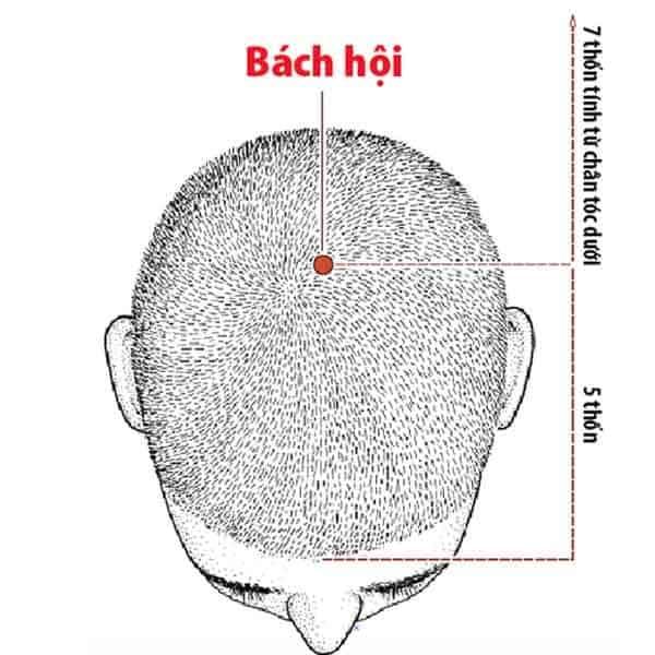 bach-hoi