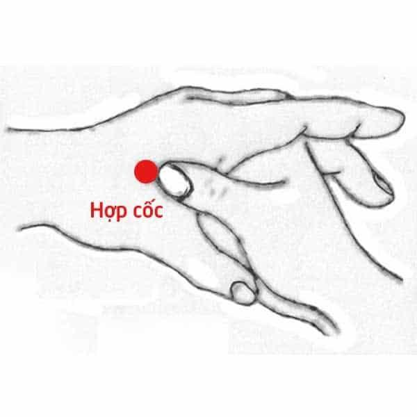 hop-coc